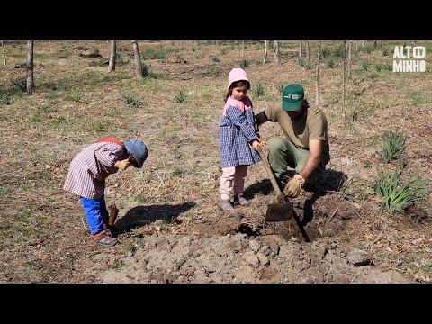 Crianças e idosos plantam 400 carvalhos em Paredes de Coura | Altominho TV