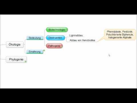 01 Crashkurs Mikrobiologie - Pilze (Mycota) allgemein