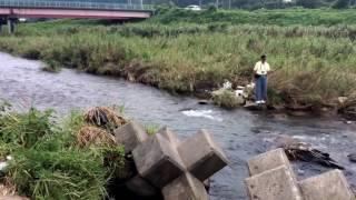 zenpapaland 小鮎釣り 知内川