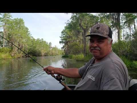 Okefenokee Swamp Bowfin Fishing