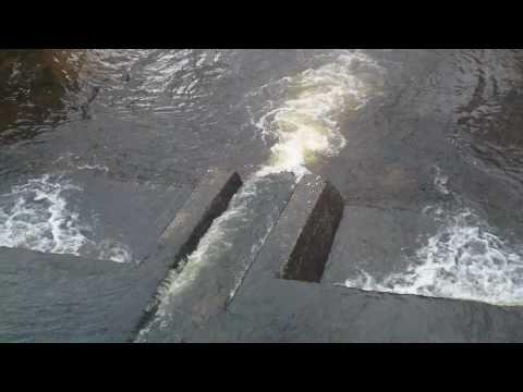Salmon Run Ireland, Thawed HD