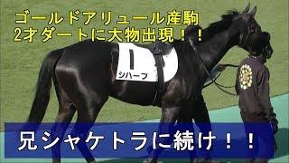 メイクデビュー東京 兄シャケトラ シハーブ Shihab