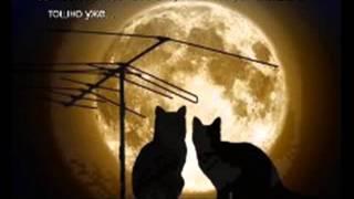Лунный, лунный кот   1