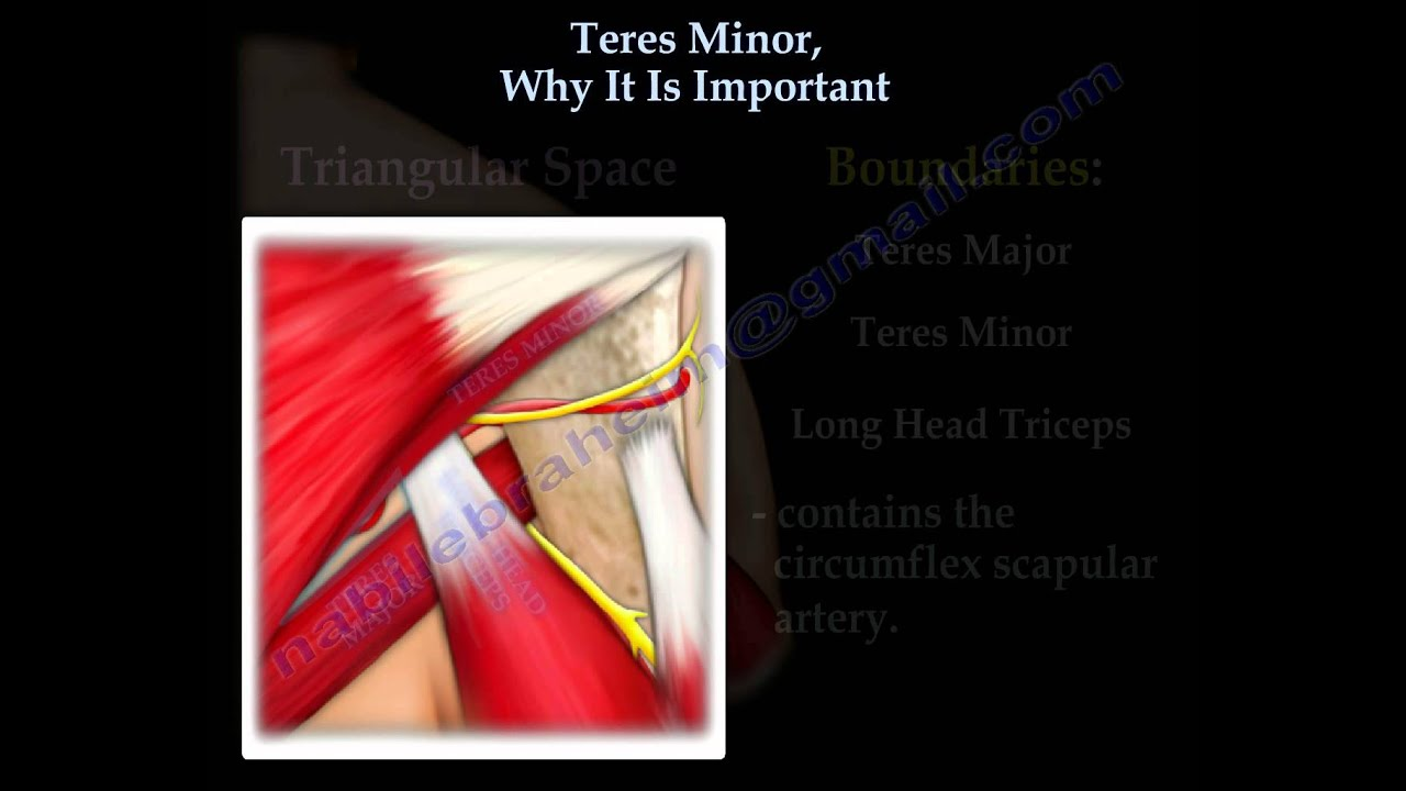 Teres Minor, Why It Is Important - Everything You Need To Know - Dr ...