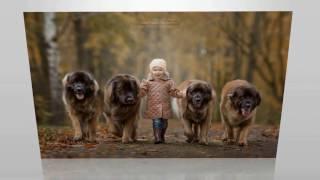 Дети и собаки;