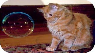Приколы с Кошками 2015 / Смешные Кошки / Смешные Животные 2015 /