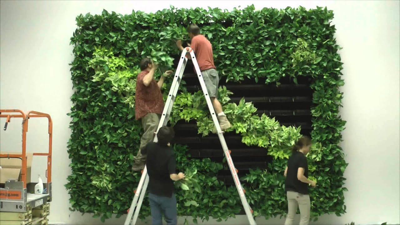 How To Make A Living Wall wall of life foliage designs systems 2 living green walls - youtube
