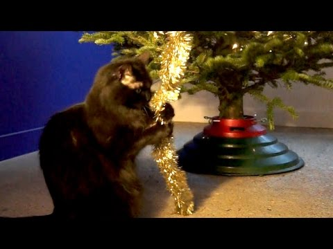 I'm Climbing Up The Christmas Tree NEOW!