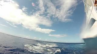2017 Bermuda Billfish Blast | Team Que Mas | Blue Marlin