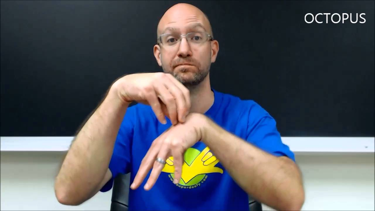 Animals | ASL - American Sign Language - YouTube - photo#35