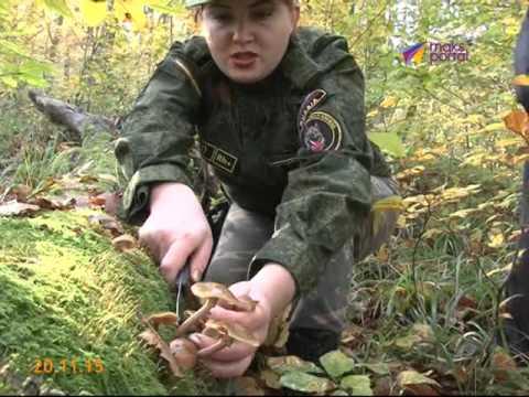 Какие грибы растут в Сочи, и как их собирать?