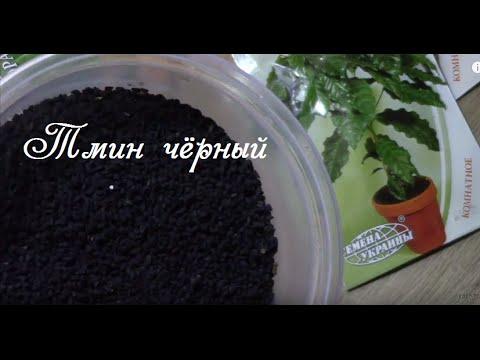 Черный тмин (калинджи) - применение и полезные свойства