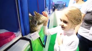 """""""КЭТСБУРГ"""" - выставка кошек и праздник для всей семьи"""