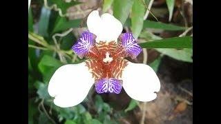 Cây Lan rừng Dã Hạc, Phi Điệp đột biến nhìn hơi dị dị | Orchid
