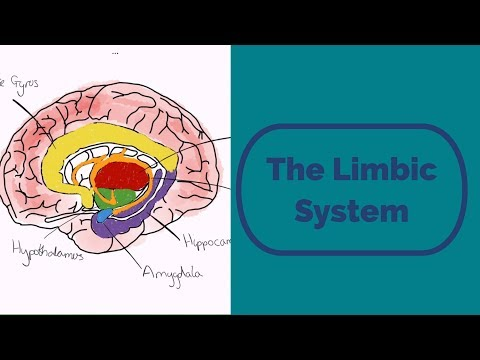 The limbic system - YouTube Limbic System Add