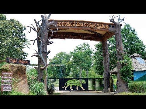 Nagarhole National Park Safari