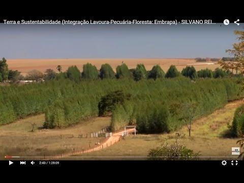 Видео Sustentabilidade Integração lavoura pecuaria