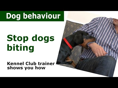 how-to-stop-a-puppy-from-biting-|-expert-advice-from-a-kennel-club-expert