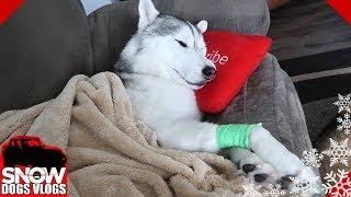 Video Memphis is Grumpy !  Dog after the dentist download MP3, 3GP, MP4, WEBM, AVI, FLV Januari 2018