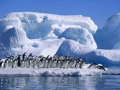 Il ballo del Pinguino
