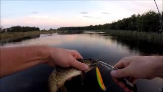 Рыбалка 28 08 2016(Рыбалка в ст. Брюховецкая Краснодарский край., 2016-08-28T21:50:12.000Z)