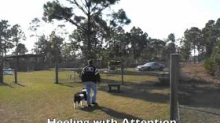 Southwest K9 Academy Border Collie Training