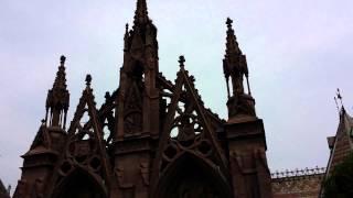 Parrots of GreenWood Cemetery, Brooklyn, NY
