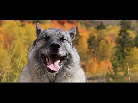 Best Friends Elkhound Edition