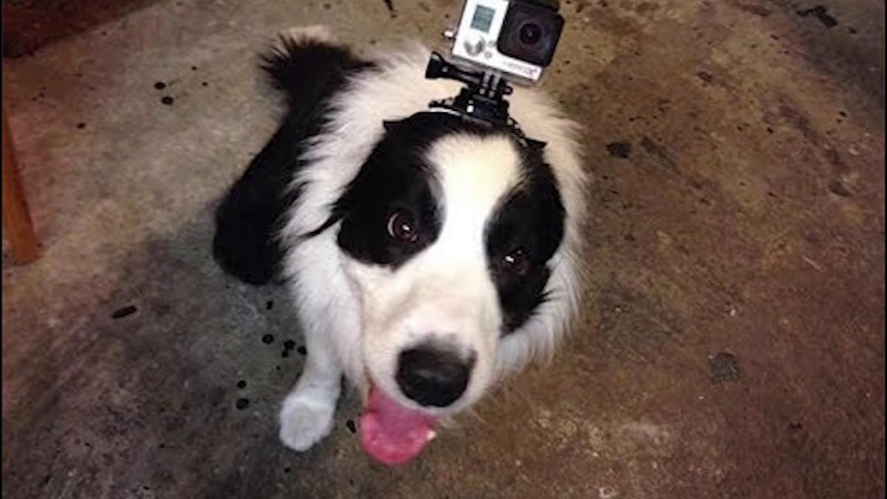 Best Way To Film With Dog Gopro