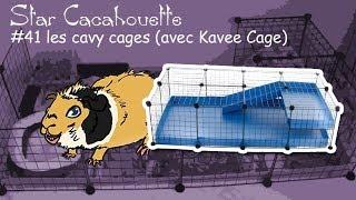 pr�sentation des cavy cages