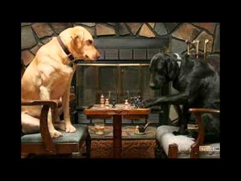 Yo y mi perro jugando ajedrez - YouTube