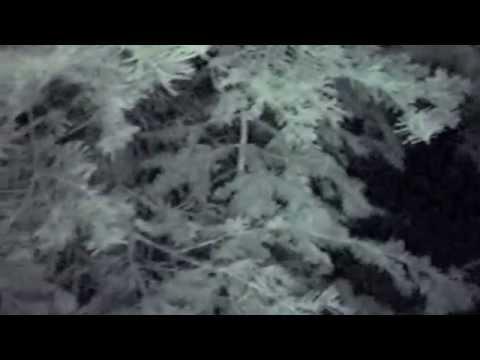 Bigfoot encounter at the Oregon Caves, Part 2