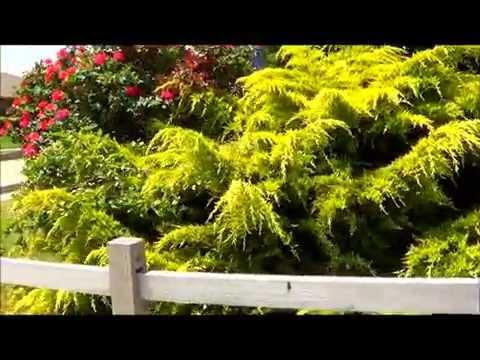 видео: Цветы на даче