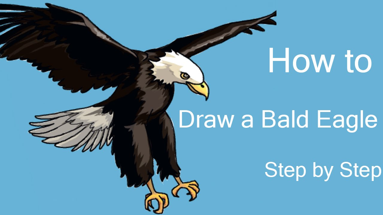 How to draw a bald eagle step by step youtube
