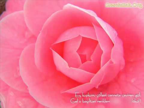 Güller açmış Ravzasında