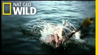 Teaser Trailer | Shark Attack Experiment Live!