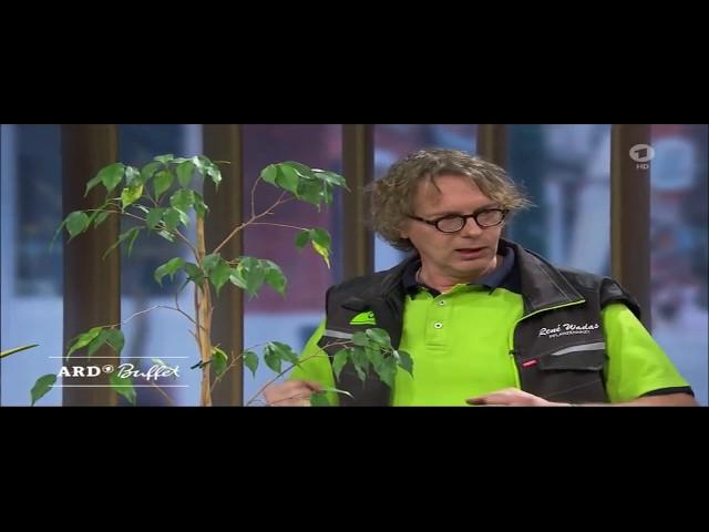 ARD-Buffet : Zimmerpflanzen - Pflege im Frühjahr