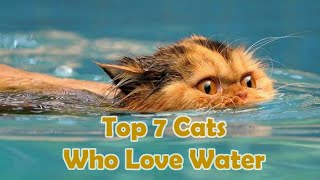 Top 7 Cats Who Love Water
