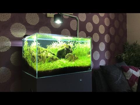 LIVE Aquascaper 600 Nature Aquarium update - Almost there!