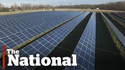 Innovative energy companies ignore Trump