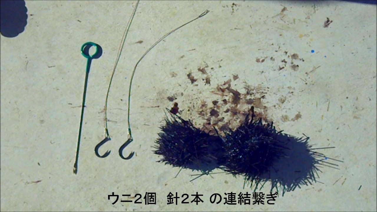 舞い込む石鯛竿シリーズ 2019.12.1 「大物を狙うためのウニと針の4通りのセット方法」