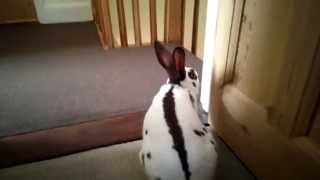 House Rabbit Tour Of Living Accommodation
