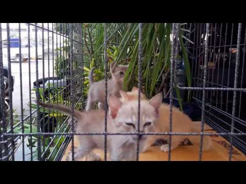 Cats Jumping  Ohhhhh  BABYyyyy  555+
