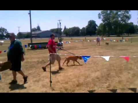 OFRNR National Sanctioned Conformation Dog Show 2012