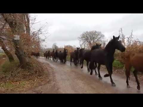 Beautiful sight Herd of Horses