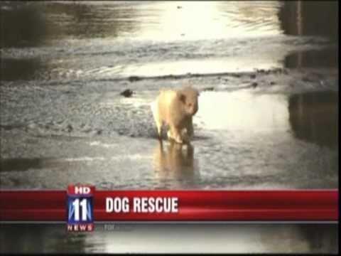 SmART Dogs rule video.mp4