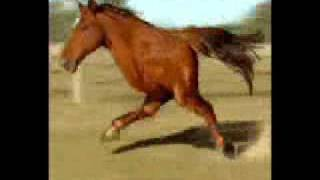 Two Legged Running Horse