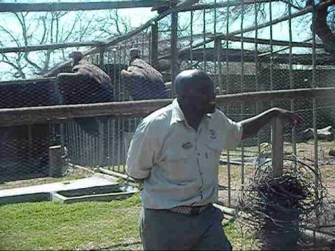 Moholoholo Rehabilitation Centre, South Africa