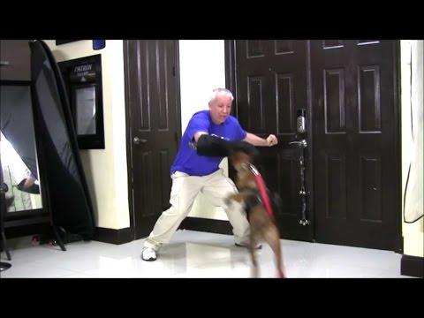 INCREDIBLE!  Belgian Malinois puppy flies through the air striking her trainer!