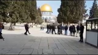 بالفيديو: 130 مستوطناً إسرائيلياً يقتحمون المسجد الأقصى